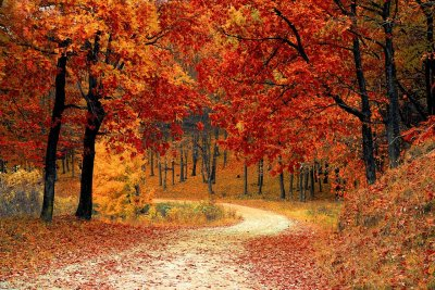 Woodland Scene in the Fall