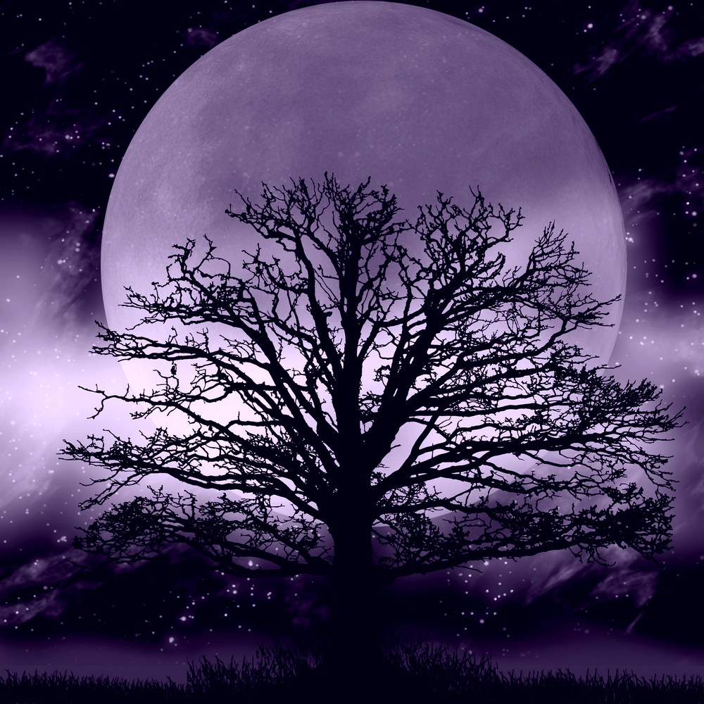 Leafless tree silhouetted by enormous moon in background